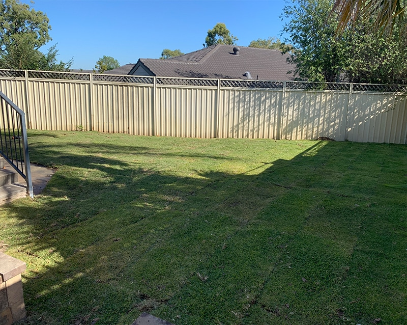 Grass Planting after pool removals